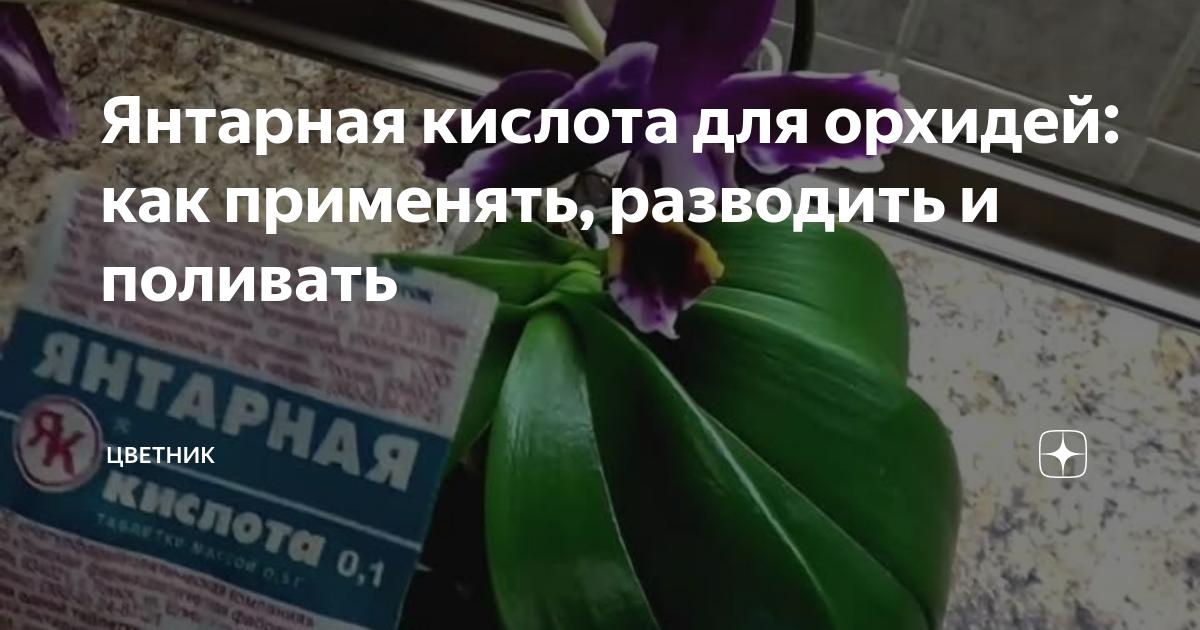 Янтарная кислота для орхидей: как применять и разводить, готовить раствор, правила полива и обработки
