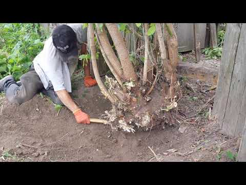 Гербициды для уничтожения кустарников и деревьев