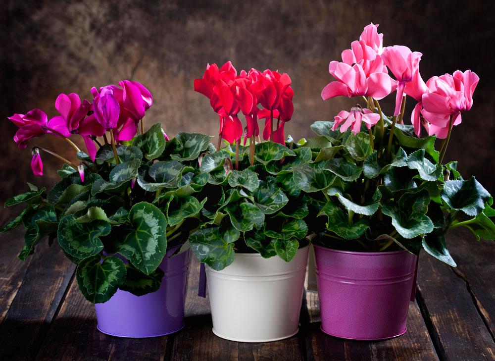 Как правильно сажать комнатные цветы