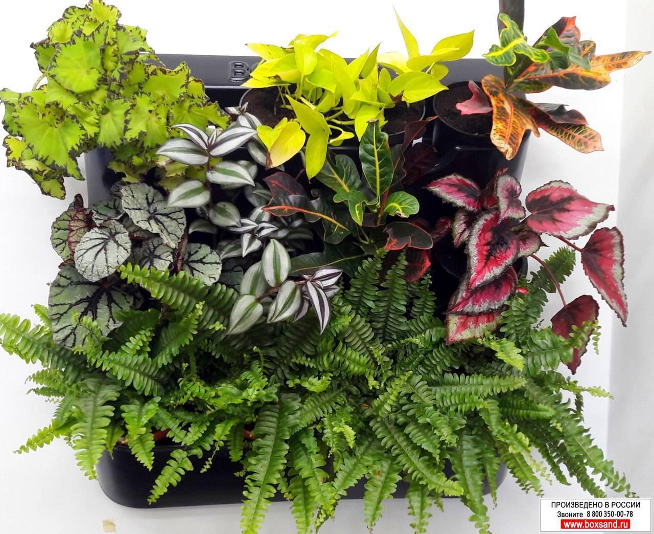 Прекрасные декоративно-лиственные комнатные растения: фото и названия