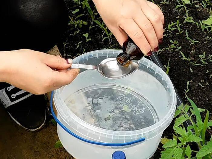 Дрожжи для подкормки растений