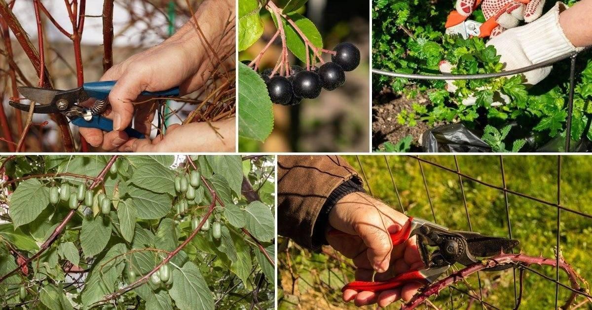 Агротехника лилейников: 6 шагов к успеху