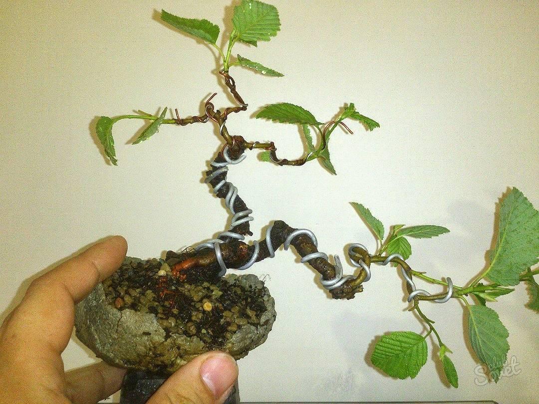 Выращивание бонсай: пошаговая инструкция с фото