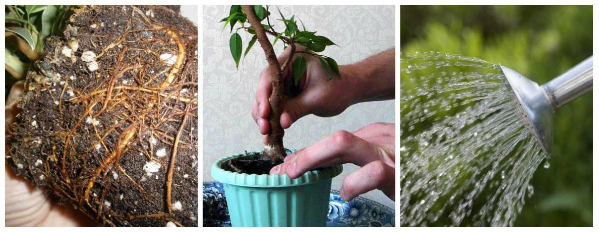Правила посадки растений в аквариум