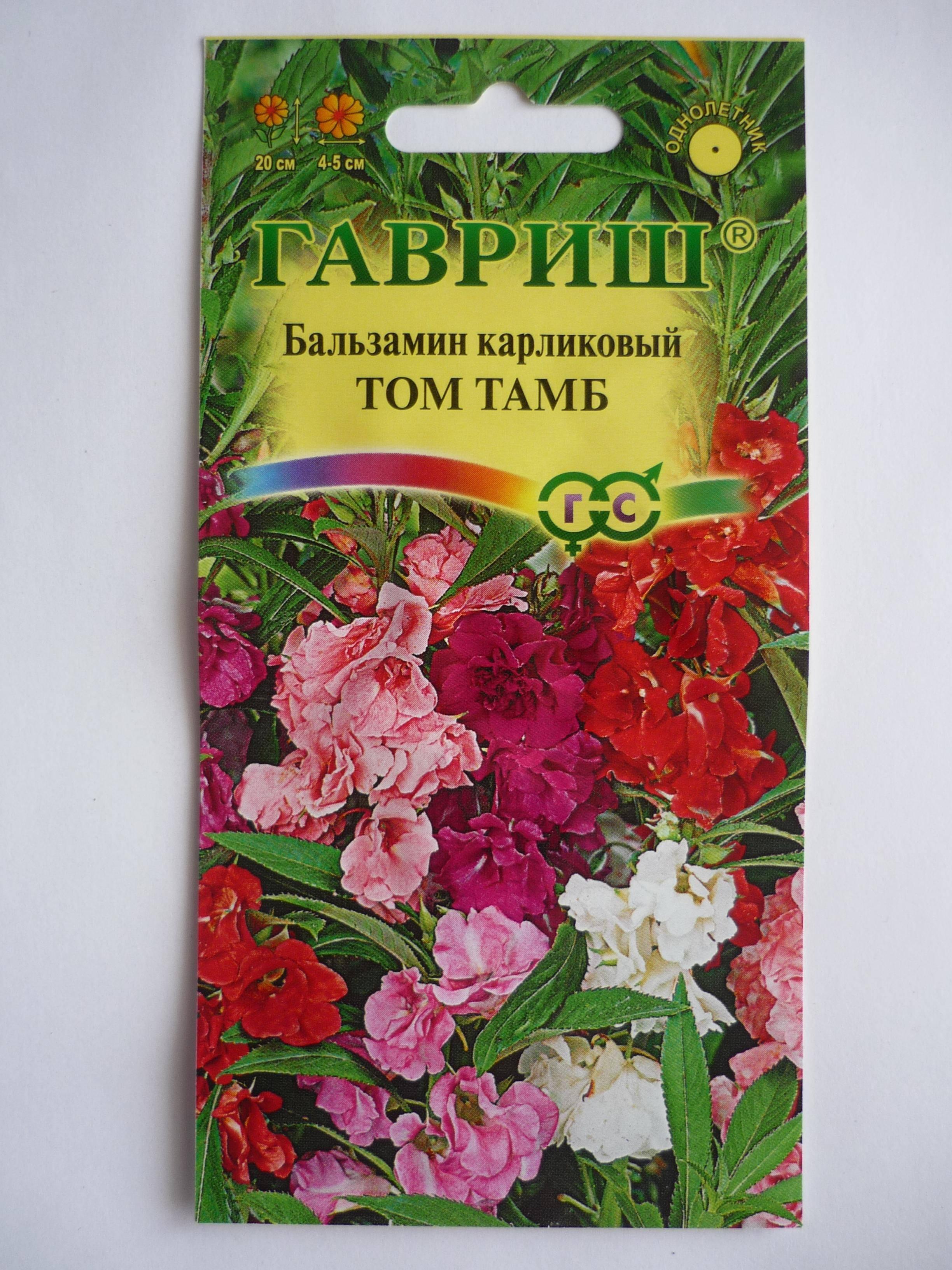 Как вырастить бальзамин из семян: пошаговая инструкция