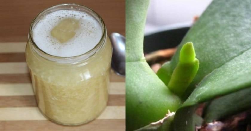 Чесночная вода для орхидей — рецепт, как применять и отзывы ?