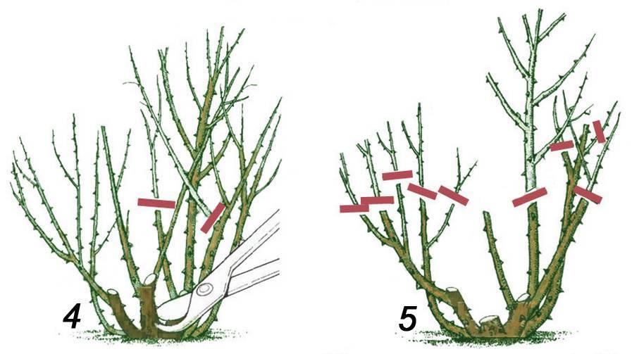 Как обрезать лилейник после цветения