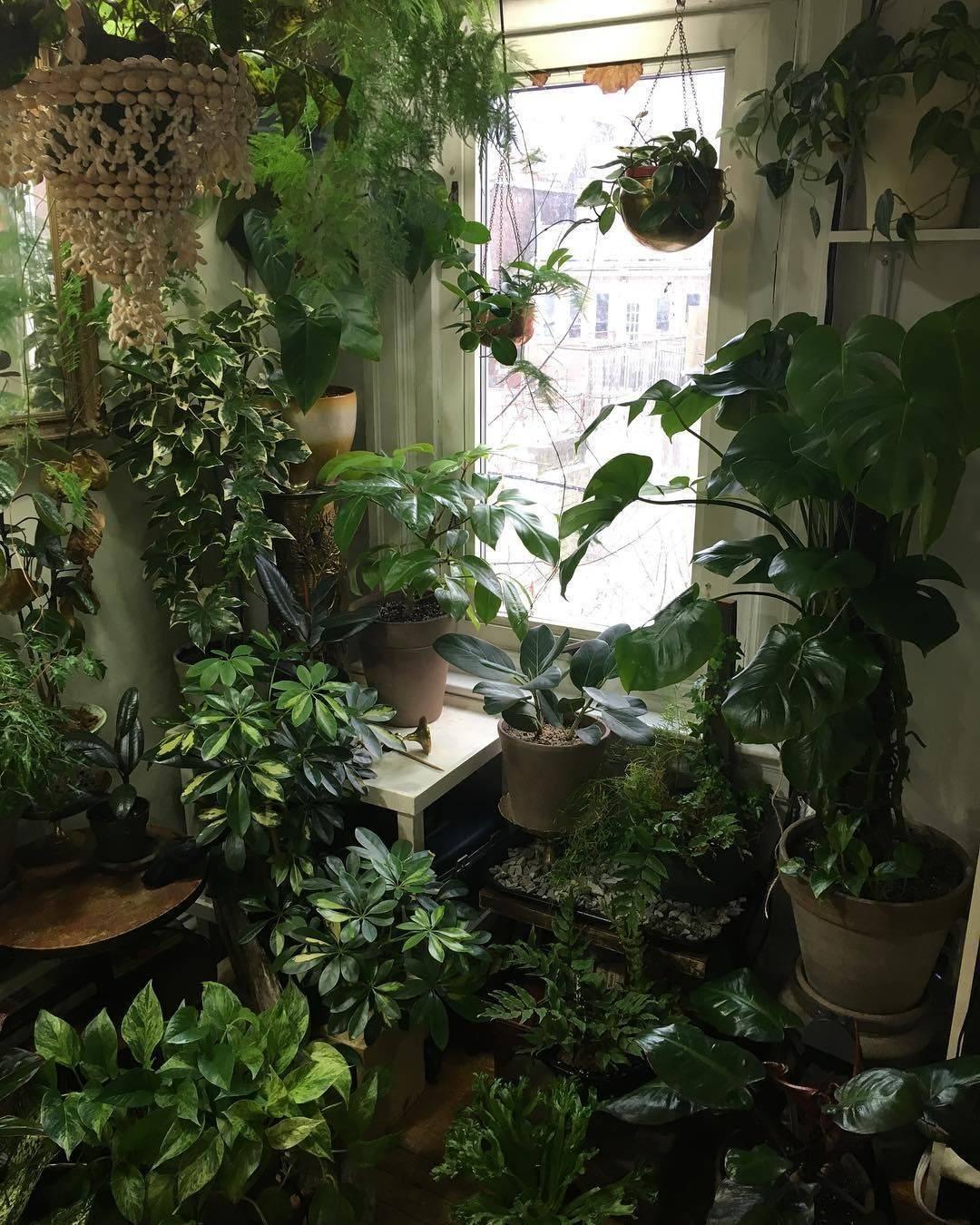 Топ-10 лучших комнатных растений для северных окон