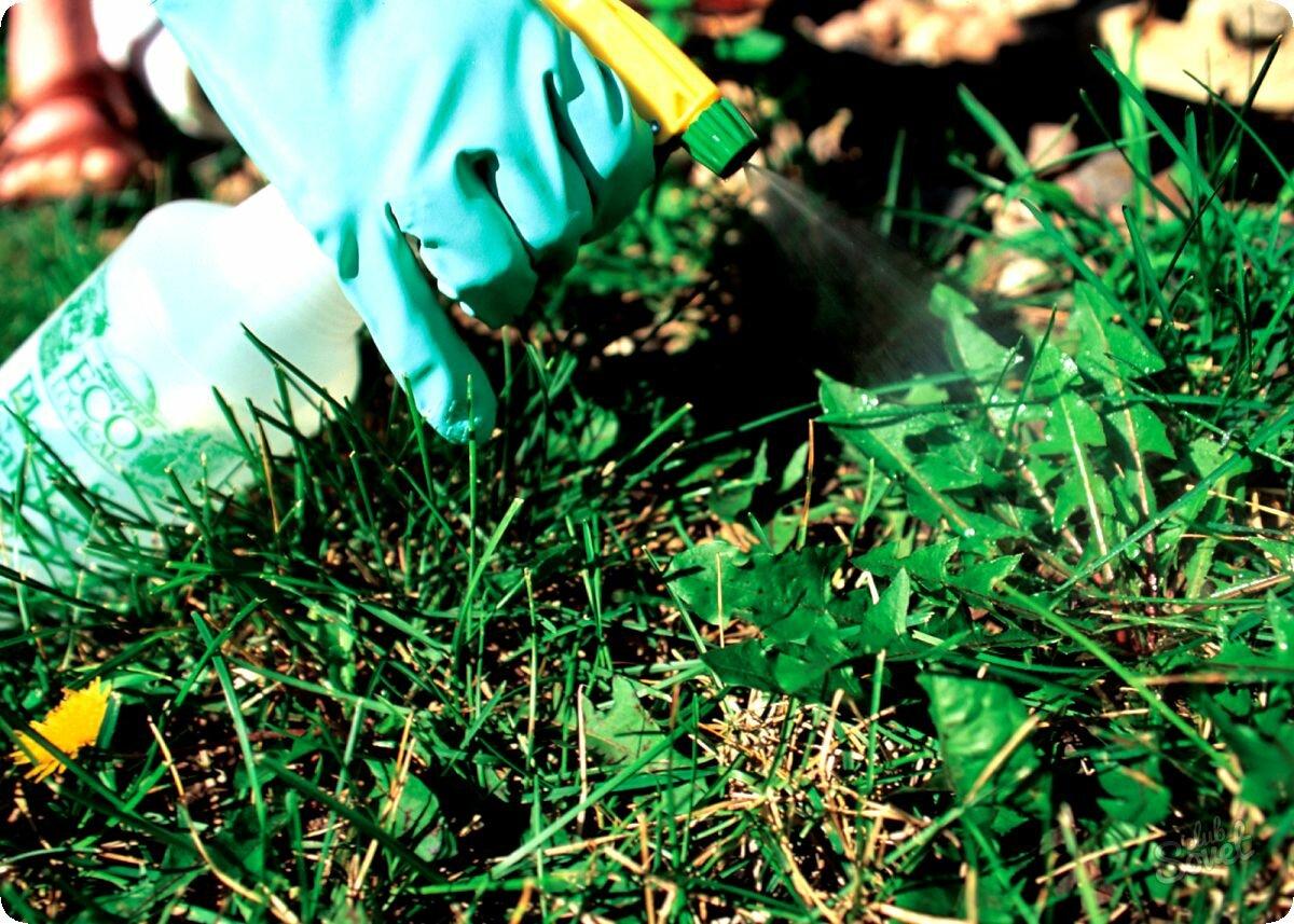 Вопрос - ответ, гербициды, арборицид, уничтожение деревьев, сорняков, сад - секреты мастера