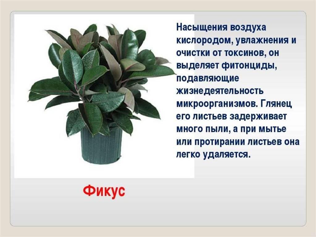 Полезные комнатные растения - естественный способ очищения воздуха