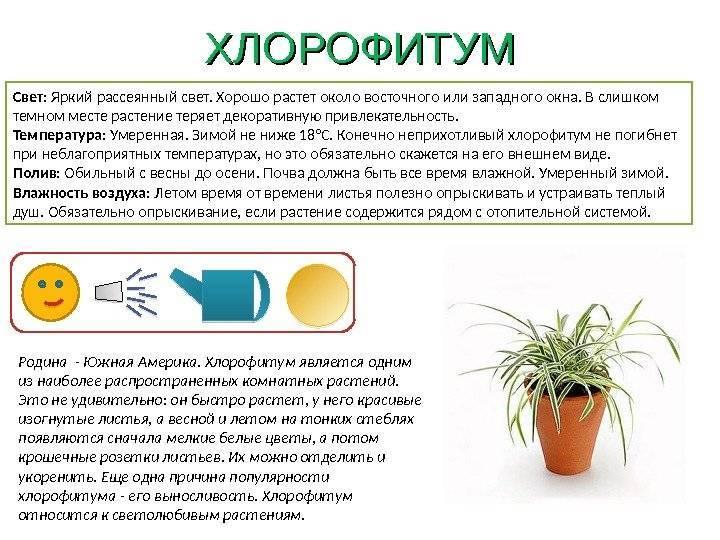 Условия по уходу за гипоциртой дома: освещение, почва, температура и другие