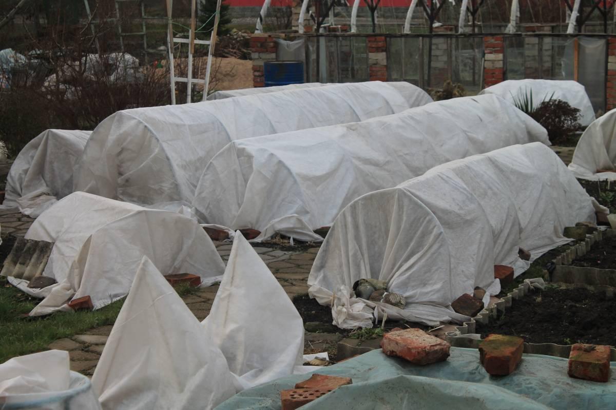 Подготовка роз к зиме и уход за ними осенью: полное руководство