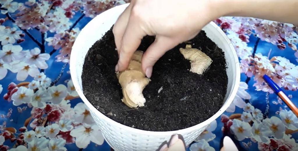 Как вырастить мяту в домашних условиях?