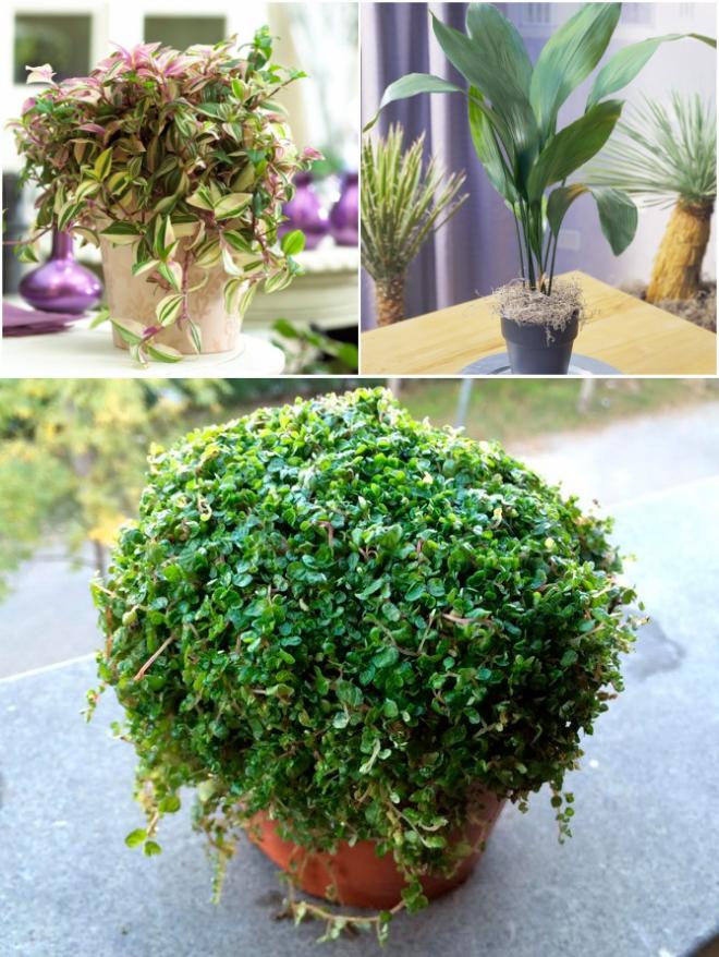 Самые стойкие спартанцы — неприхотливые комнатные растения