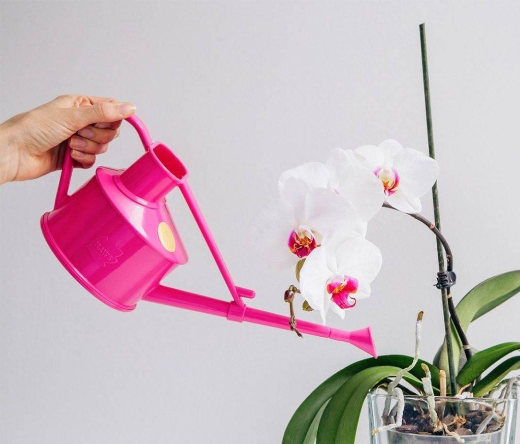 Секреты и тонкости ухода за орхидеями в домашних условиях