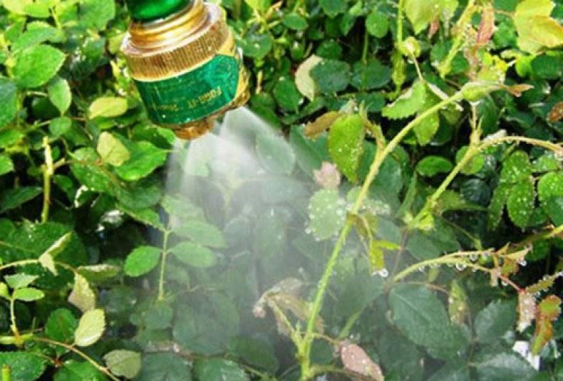 Дюшенея индийская (земляника): съедобная или нет, выращивание из семян, полезные свойства, фото