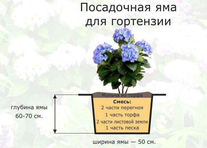 Почва для гортензии.
