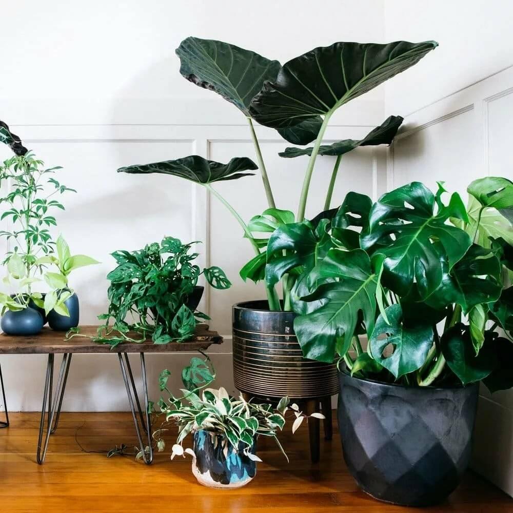 Цветы для спальни: ценные рекомендации по озеленению комнаты (23 фото)