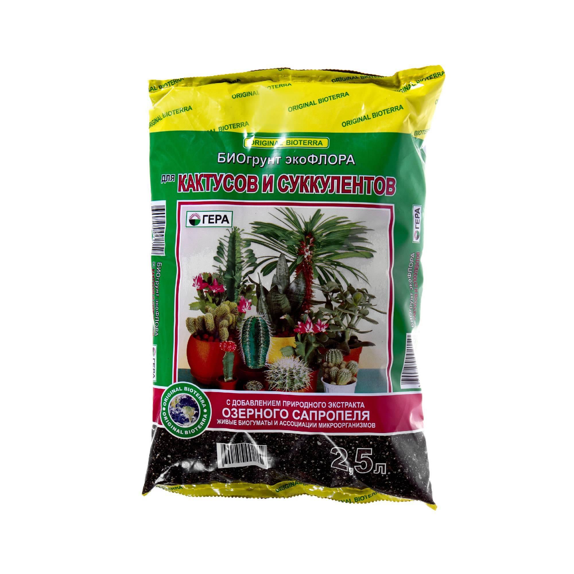 Пушистый кактус: как называется и варианты ухода