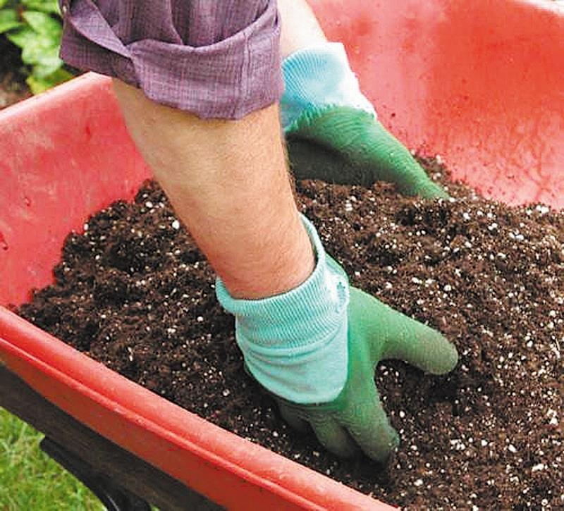 Маранта: фото, виды, секреты выращивания и уход в домашних условиях