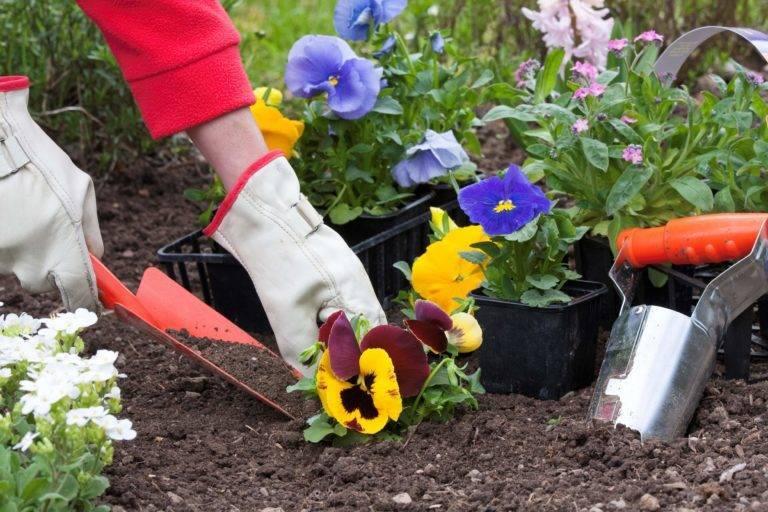 Резуха или арабис: виды и сорта, условия выращивания