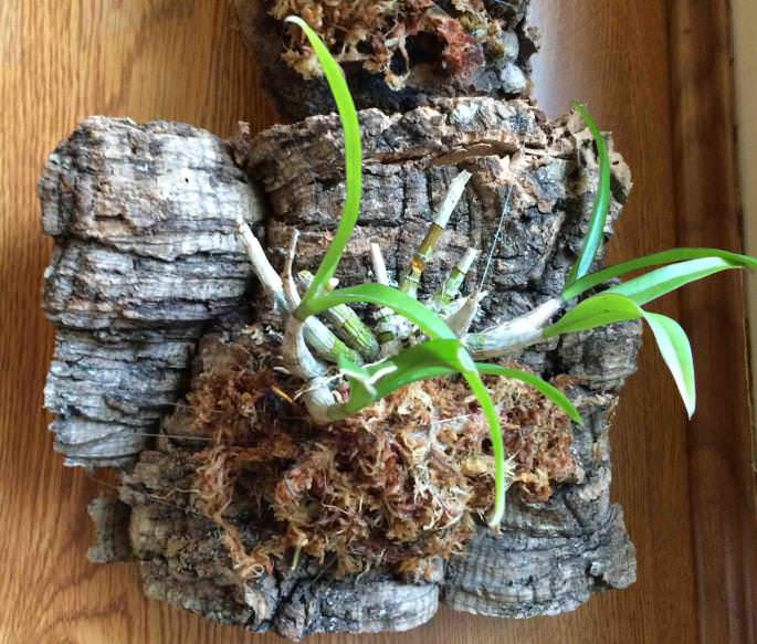 Хороший грунт для орхидей своими руками: правильный состав и приготовление