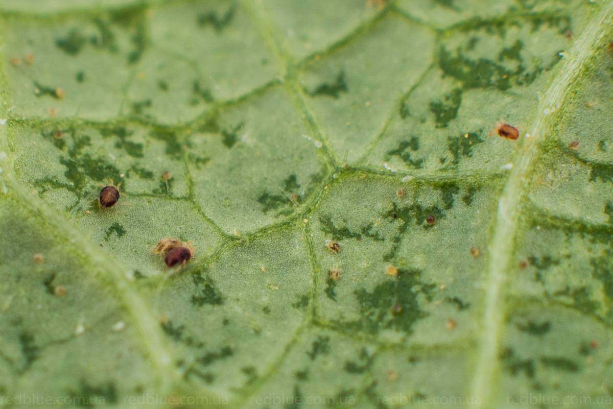 У замиокулькаса — желтеют листья, причина, болезни