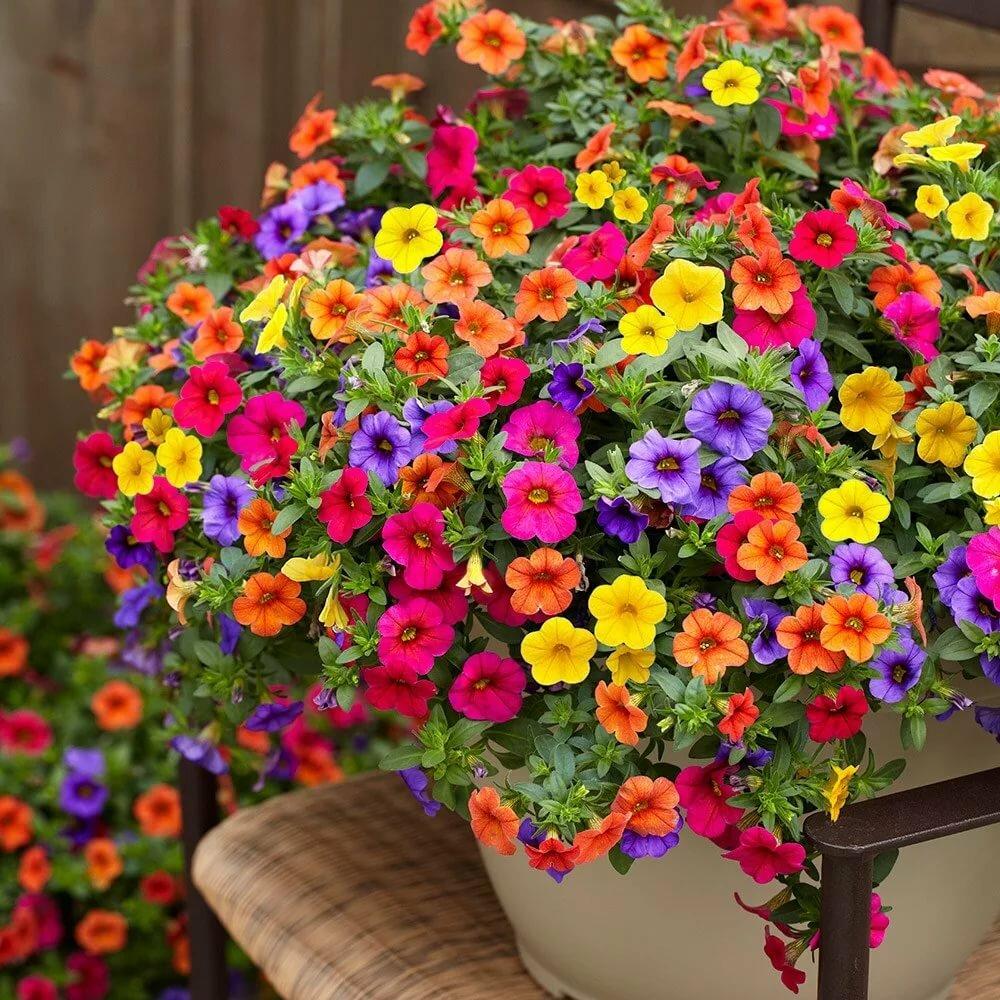 Сорта петунии кустовой и особенности ухода за ними