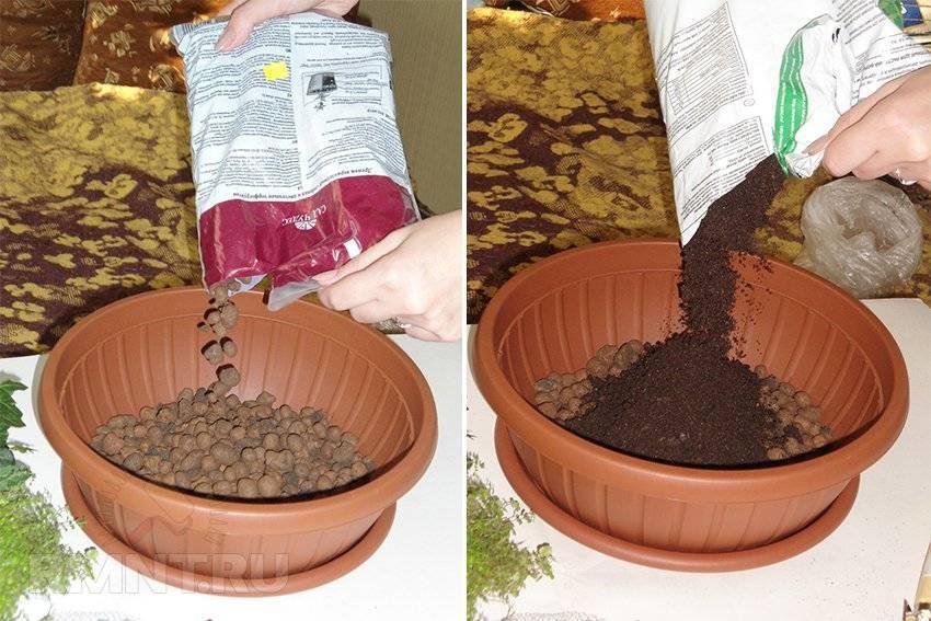 Посадка алоэ в домашних условиях: какие нужны грунт и горшок для выращивания