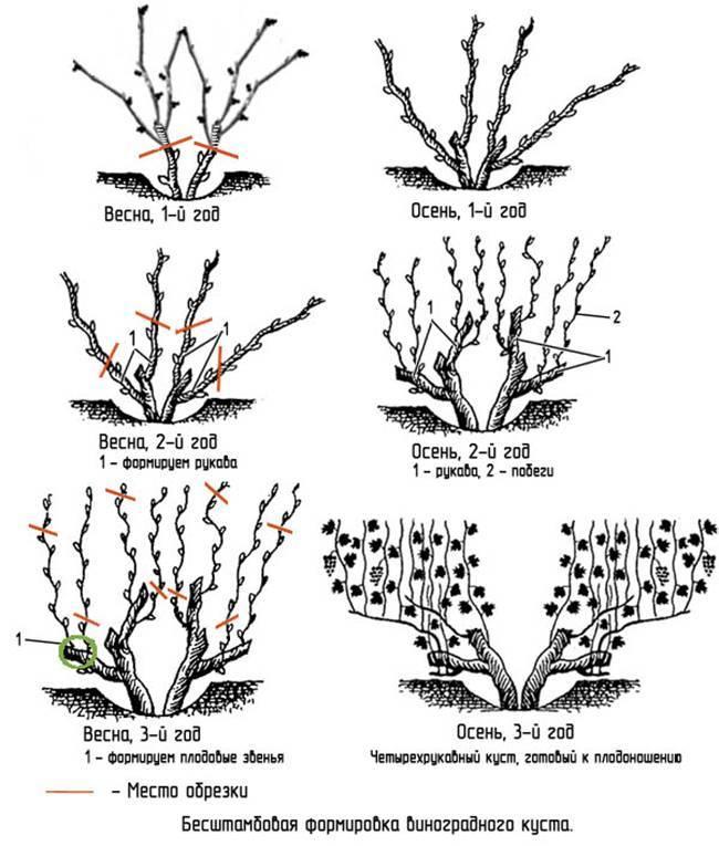 Обрезка гортензии метельчатой: весной, после посадки, дата