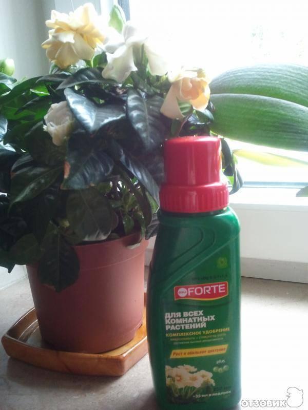 """""""бона форте"""" для орхидей: состав тоника """"bona forte"""", способы применения и подробная инструкция по использованию этого удобрения"""