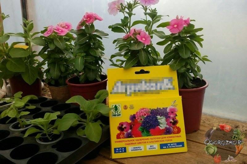 Чем подкормить петунию для обильного цветения: какими народными средствами лучше удобрять растение во время роста, какой нужен уход в домашних условиях для пышности?