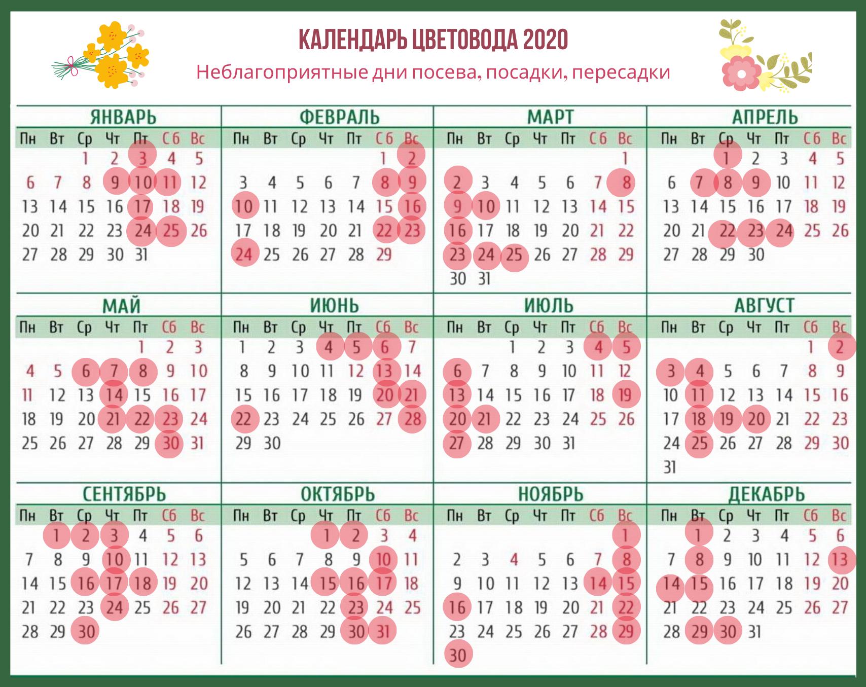 Лунный календарь для комнатных растений на 2020 год