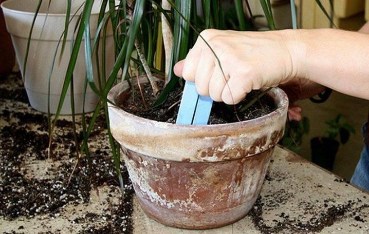 Какая почва нужна для драцены в домашних условиях: виды подбор и посадка
