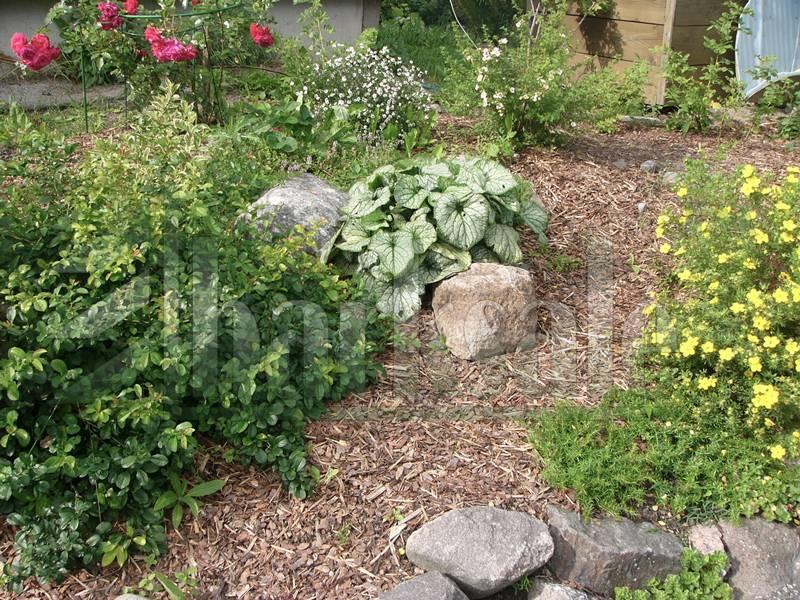 Мульчирование почвы — что это и как делается правильно?