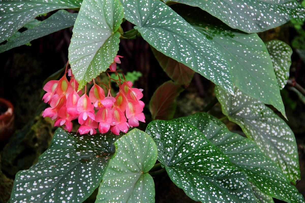 Цветущие комнатные растения, с которыми справится даже новичок