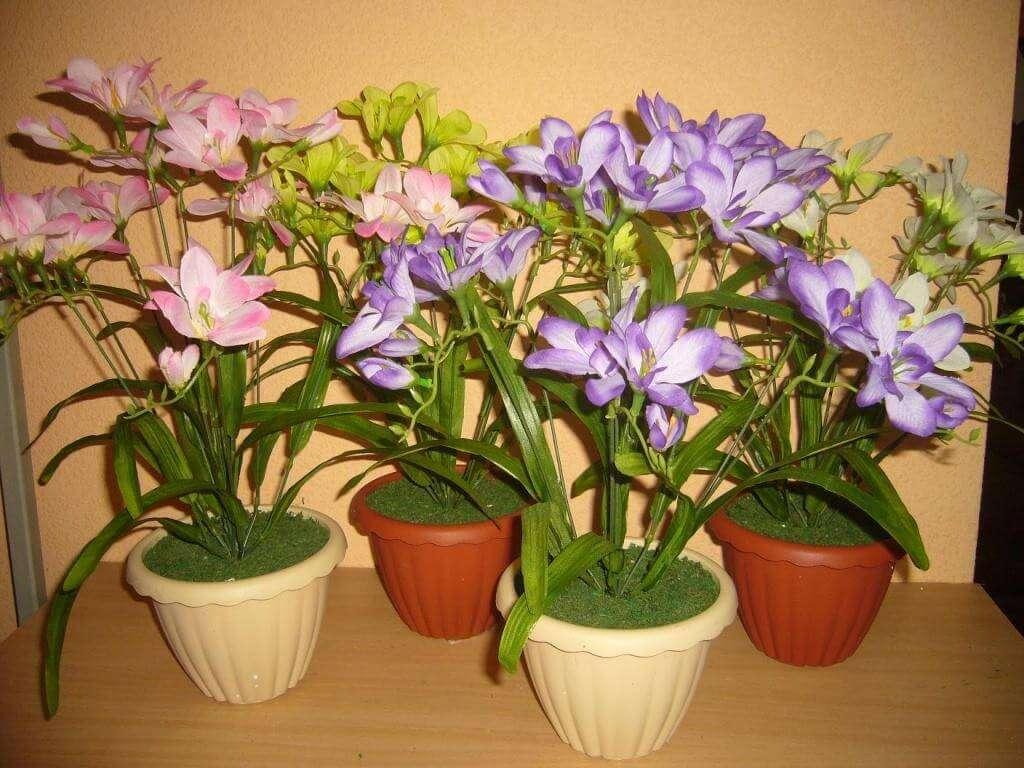 Фрезия: выращивание и уход в домашних условиях