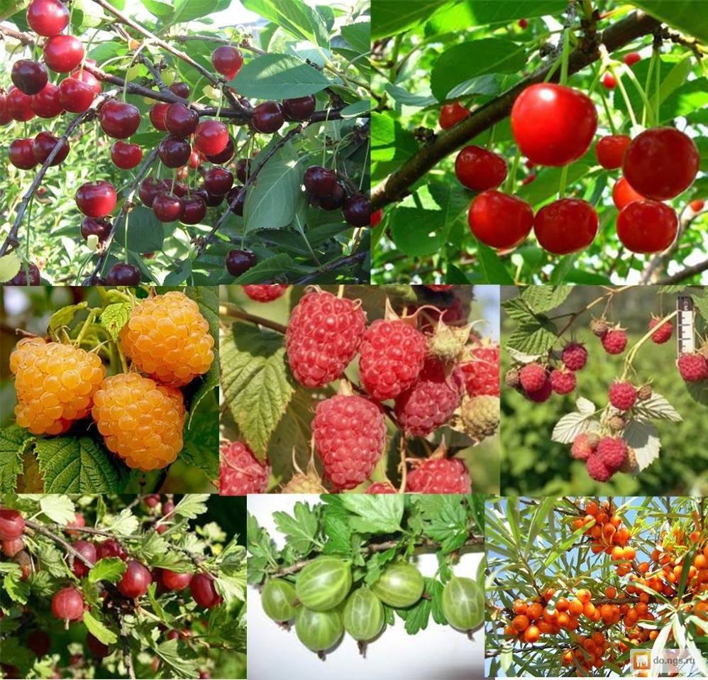 Деревья для сада: выбираем красивую композицию (24 фото)