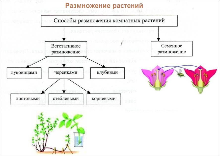 Секреты ухода и размножения комнатных растений