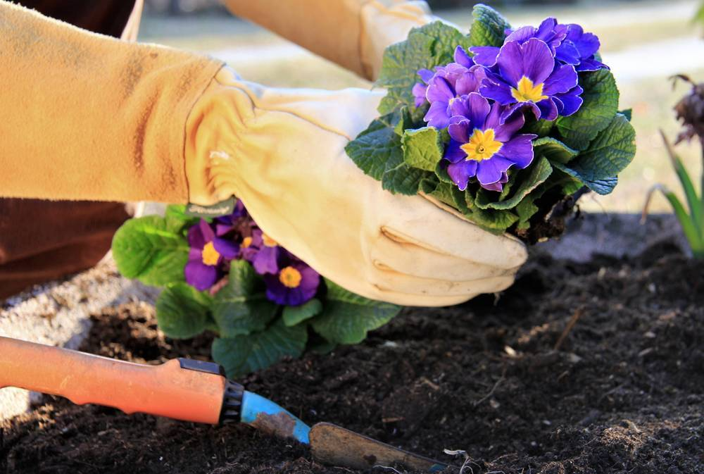 Кальцеолярия: как ухаживать и размножать растение - энциклопедия цветов