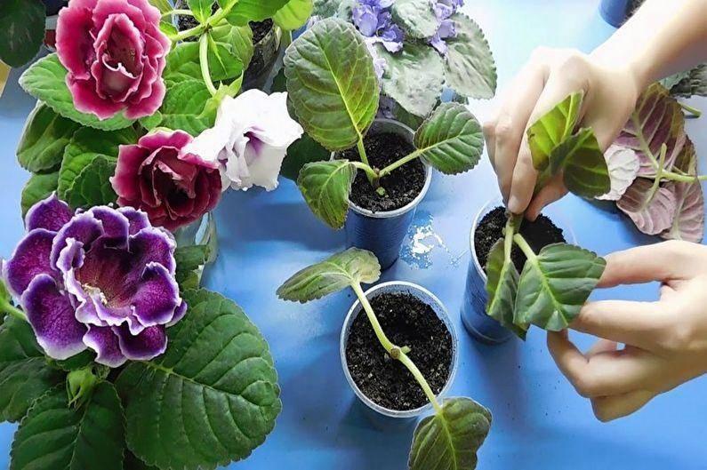 Способы посадки глоксинии и правила ухода за цветком. какой грунт нужен растению?