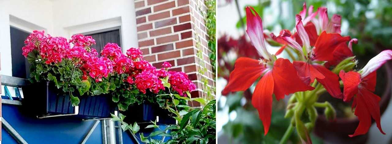 Тенелюбивые комнатные растения (43 фото): названия цветов для темных помещений, которым не нужен солнечный свет. выбор для прихожей и квартиры