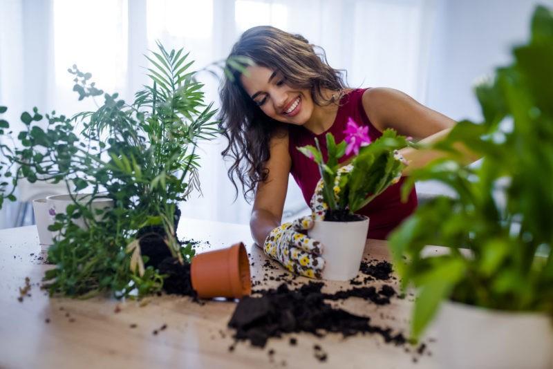 Чем подкормить цветы для обильного цветения в саду