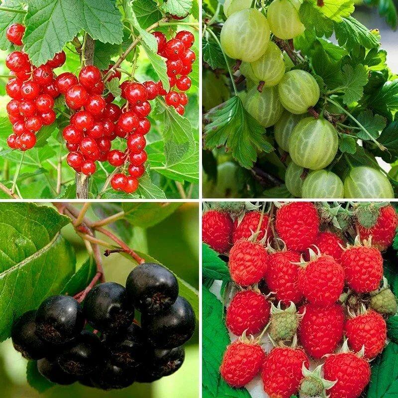 Колоновидные фруктовые деревья: лучшие сорта и правила ухода