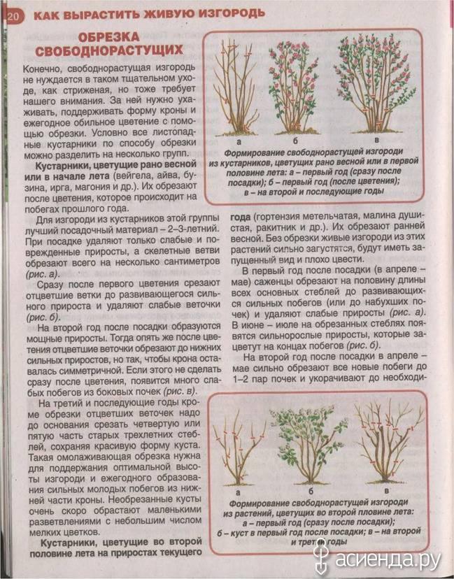 Правила обрезки и формирования форзиции, после цветения: пошаговая инструкция