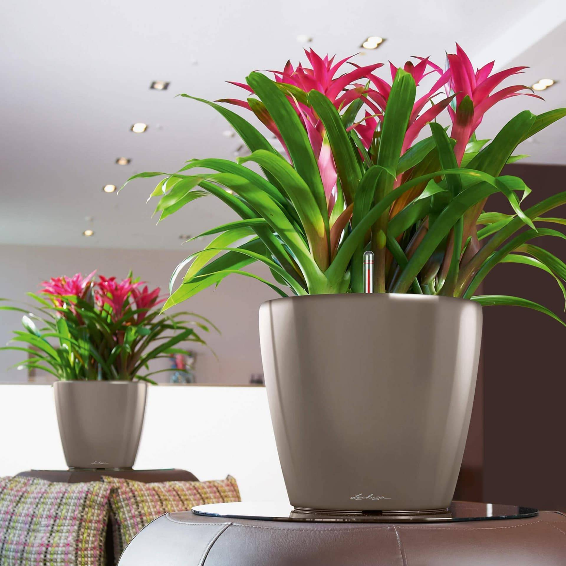 Неприхотливые комнатные растения и цветы