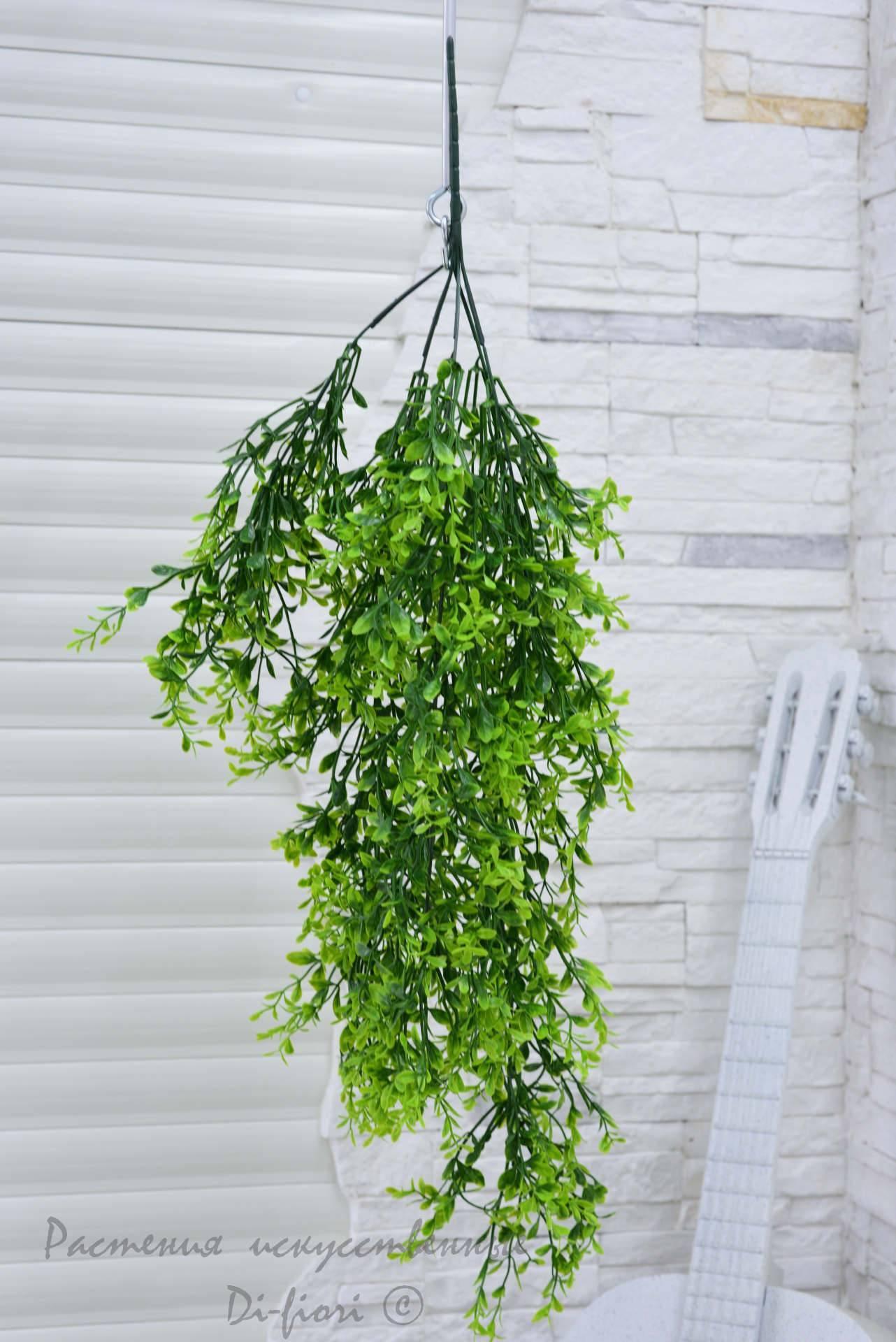 Вьющиеся комнатные растения (75+ фото)