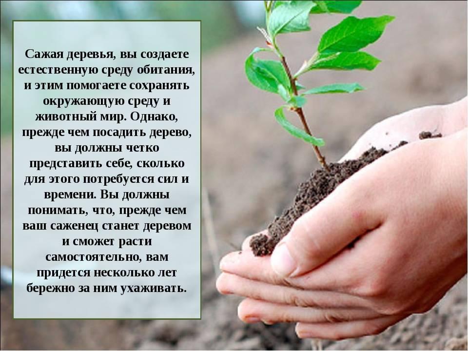 Все о посадке деревьев: как сажать деревья, тенелюбивые и засухоустойчивые