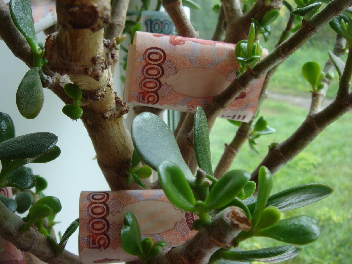 Выбираем горшок для денежного дерева