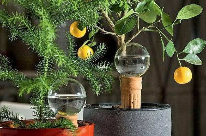 Пересадка комнатных растений в благоприятные дни по лунному календарю